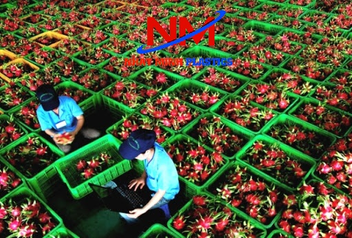 Rổ nhựa vuông công nghiệp sử dụng ở các vựa trái cây làm sóng nhựa đựng trái cây