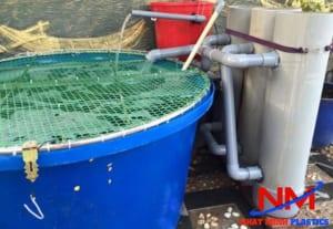 Sử dụng tank nhựa hình tròn nuôi cá Koi giúp tiết kiệm tối đa chi phí xây dựng hồ cho cá