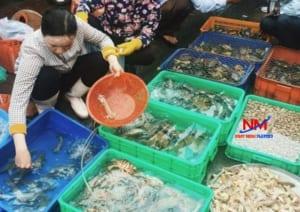 Khay nhựa đặc chứa và trưng bày bán các loại thủy sản trong chợ