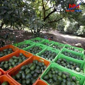 Sóng nhựa đựng trái cây đa dạng kích thước,màu sắc khác nhau