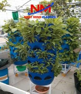 Thùng phuy nhựa cũ trồng rau xanh hữu cơ