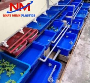 Mô hình tank nhựa nuôi cá con