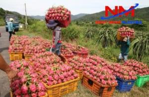 Rổ chở hàng chuyên chứa đựng và vận chuyển các loại trái cây tại vườn