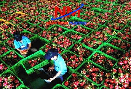 Hình ảnh rổ nhựa vuông công nghiệp hay chính là sóng nhựa đựng trái cây rất sạch sẽ,gọn gàng